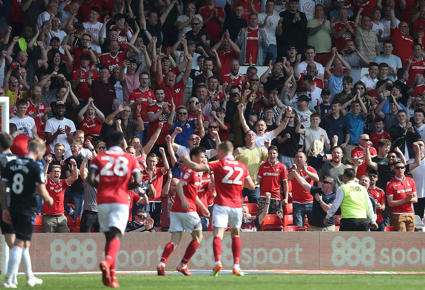 Forest celebrate